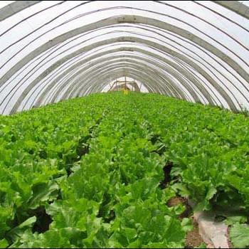 农业及园艺系列