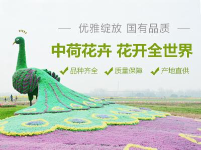 江蘇中荷花卉股份有限公司