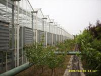 文洛型玻璃温室