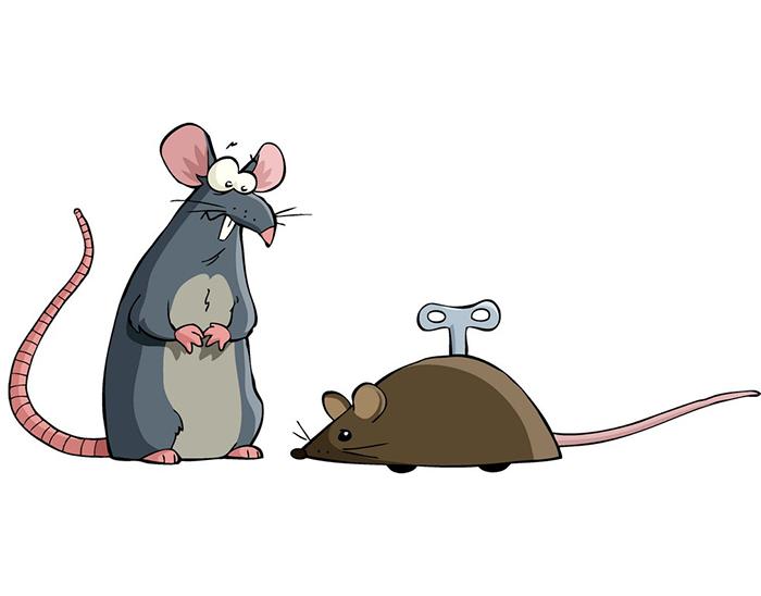 鼠类防治方案