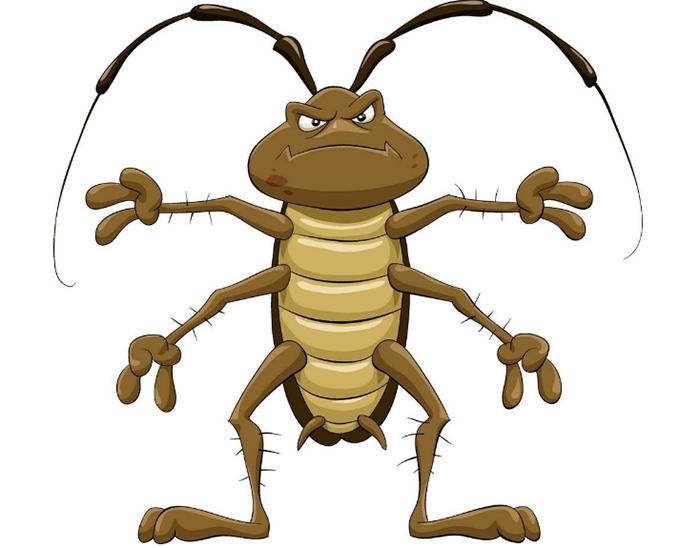 蟑螂防治服务