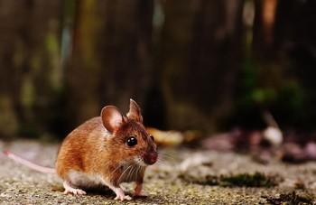 鼠类防治服务